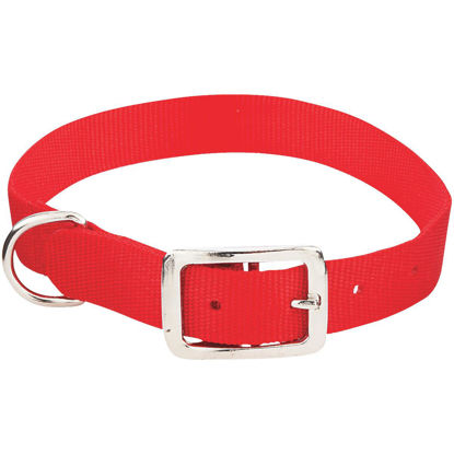 Picture of Westminster Pet Ruffin' it Adjustable 22 In. Nylon Dog Collar
