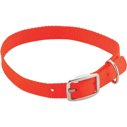 Picture of Westminster Pet Ruffin' it 24 In. Nylon Dog Collar
