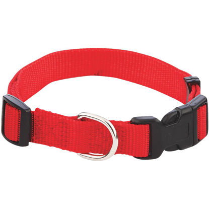 Picture of Westminster Pet Ruffin' it Adjustable 14 In. to 20 In. Nylon Dog Collar