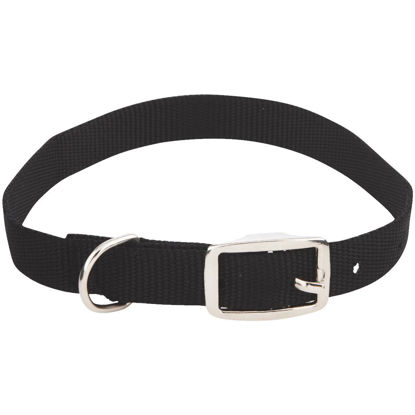 Picture of Westminster Pet Ruffin' it Adjustable 20 In. Nylon Dog Collar