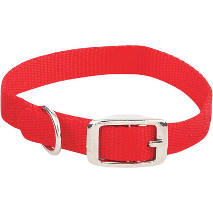 Picture of Westminster Pet Ruffin' it Adjustable 14 In. Nylon Dog Collar