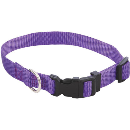 Picture of Westminster Pet Ruffin' it Fashion 10 In. to 16 In. Nylon Dog Collar