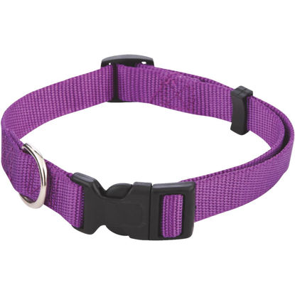 Picture of Westminster Pet Ruffin' it Fashion 14 In. to 20 In. Nylon Dog Collar